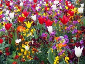 Encore plus de fleurs (4e arr.) copy